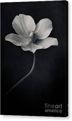 Catch The Light Canvas Print by Priska Wettstein