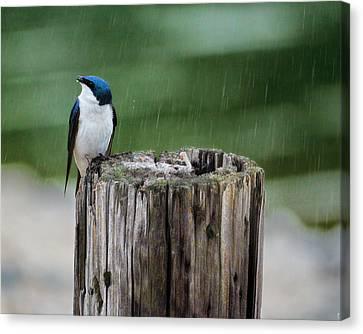 Catching Raindrops Canvas Print by Jai Johnson