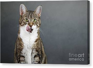 Catlick Canvas Print by Nailia Schwarz