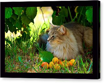 Cat's Mountain Summer Canvas Print by Susanne Still