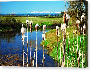 Cattails Seen In Front Of The Olympic Mountains Canvas Print by Maralei Keith Nelson