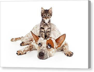 Catte Dog With Kitten On His Head Canvas Print by Susan Schmitz