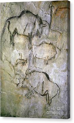 Cave Painting Canvas Print by Tom McHugh