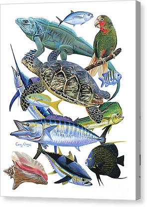 Cayman Collage Canvas Print by Carey Chen