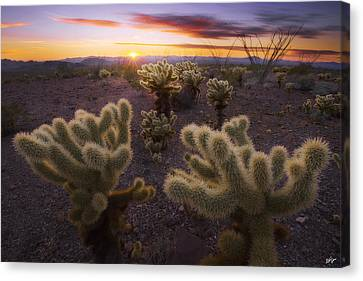 Celebration Canvas Print by Peter Coskun