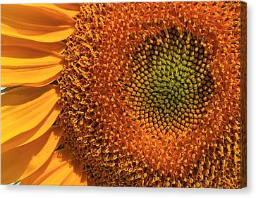 Center Of Attention Canvas Print by Donna Kennedy