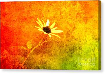 Center Of The Glory. Canvas Print by Beverly Guilliams