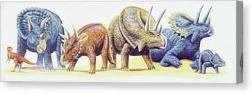 Ceratopsid Dinosaurs Canvas Print by Deagostini/uig