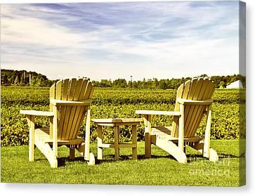 Chairs Overlooking Vineyard Canvas Print by Elena Elisseeva