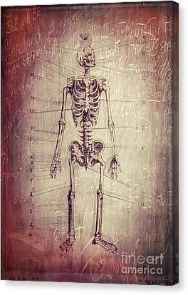 Chalkboard Skeleton Canvas Print by Edward Fielding