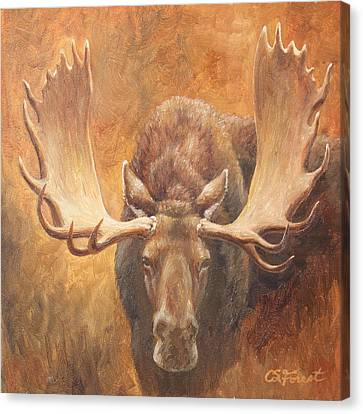 Bull Moose - Challenge Canvas Print by Crista Forest