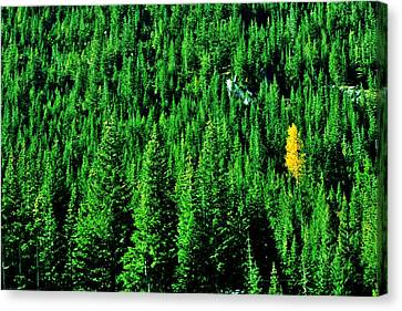 Change Is Good Canvas Print by Benjamin Yeager
