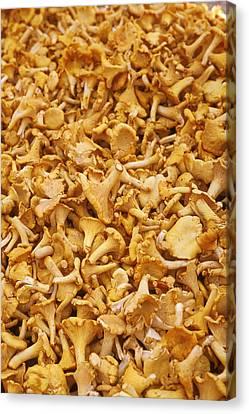 Chanterelle Mushroom Canvas Print by Anonymous