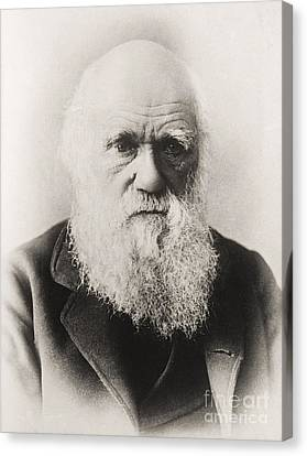 Charles Darwin Canvas Print by English School