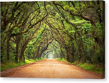 Charleston Sc Edisto Island - Botany Bay Road Canvas Print by Dave Allen