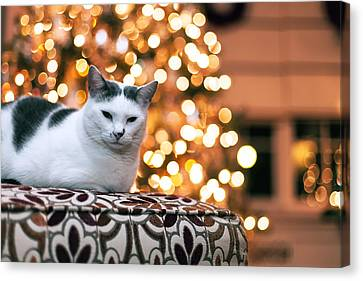 Charly And The Xmas Tree Canvas Print by Edward Kreis