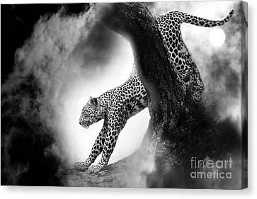 Chasing... Canvas Print by Christine Sponchia