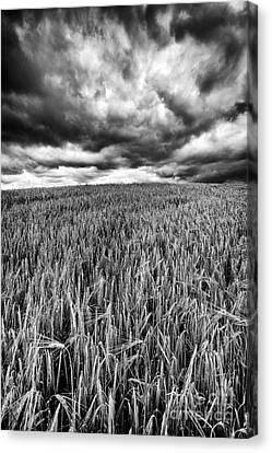 Chasing The Storm Canvas Print by John Farnan