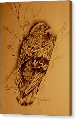 Checker Pigeon Canvas Print by Derrick Higgins