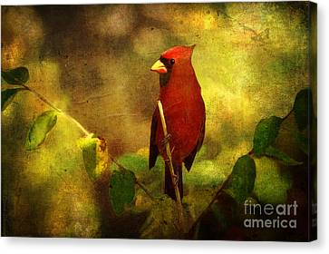 Cheery Red Cardinal  Canvas Print by Lianne Schneider