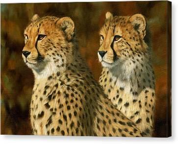 Cheetah Brothers Canvas Print by David Stribbling