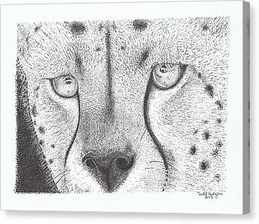Cheetah Face Canvas Print by Todd Hodgins