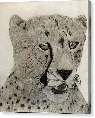 Cheetah II Canvas Print by Noah Burdett
