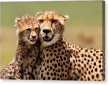 Cheetah Mother And Cub In Masai Mara Canvas Print by Maggy Meyer