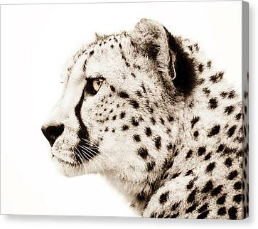 Cheetah Canvas Print by Jacky Gerritsen