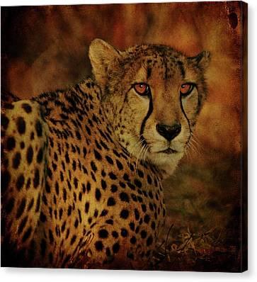 Cheetah Canvas Print by Sandy Keeton
