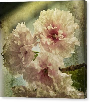 Cherries Jubilee Canvas Print by Terry Rowe