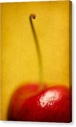 Cherry Bliss Canvas Print by Amy Weiss