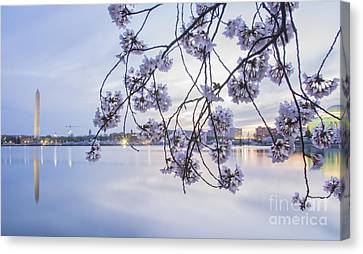 Cherry Blossom Dawning Canvas Print by Terry Rowe