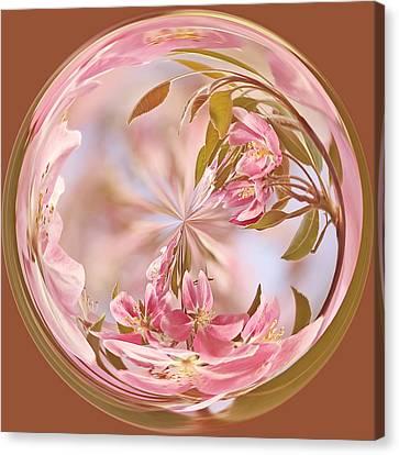 Cherry Blossom Orb Canvas Print by Kim Hojnacki