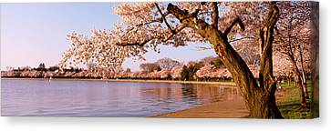 Cherry Blossom Tree Along A Lake Canvas Print by Panoramic Images