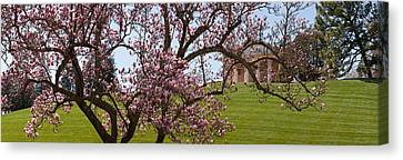 Cherry Blossom Trees At The Gravesite Canvas Print by Panoramic Images