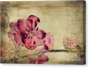 Cherry Blossom With Textures Canvas Print by John Edwards