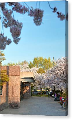 Cherry Blossoms 2013 - 021 Canvas Print by Metro DC Photography