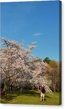 Cherry Blossoms 2013 - 029 Canvas Print by Metro DC Photography