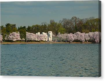 Cherry Blossoms 2013 - 055 Canvas Print by Metro DC Photography