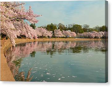 Cherry Blossoms 2013 - 083 Canvas Print by Metro DC Photography