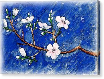 Cherry Blossoms Canvas Print by Irina Sztukowski