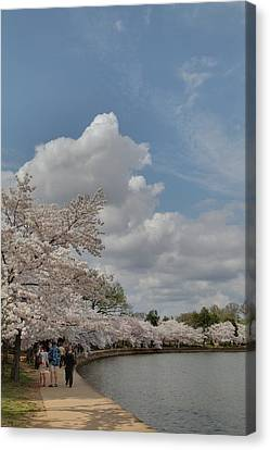 Cherry Blossoms - Washington Dc - 011372 Canvas Print by DC Photographer