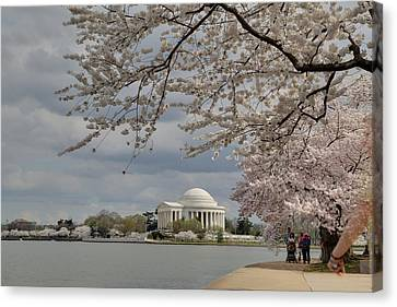 Cherry Blossoms With Jefferson Memorial - Washington Dc - 011317 Canvas Print by DC Photographer