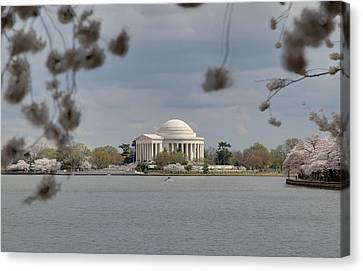 Cherry Blossoms With Jefferson Memorial - Washington Dc - 011318 Canvas Print by DC Photographer