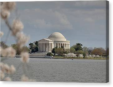 Cherry Blossoms With Jefferson Memorial - Washington Dc - 011328 Canvas Print by DC Photographer