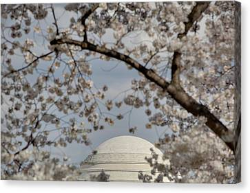 Cherry Blossoms With Jefferson Memorial - Washington Dc - 011331 Canvas Print by DC Photographer