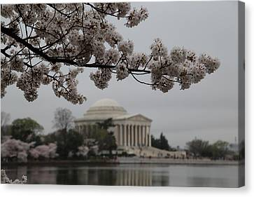 Cherry Blossoms With Jefferson Memorial - Washington Dc - 011345 Canvas Print by DC Photographer