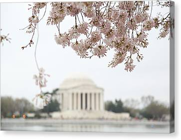 Cherry Blossoms With Jefferson Memorial - Washington Dc - 011350 Canvas Print by DC Photographer