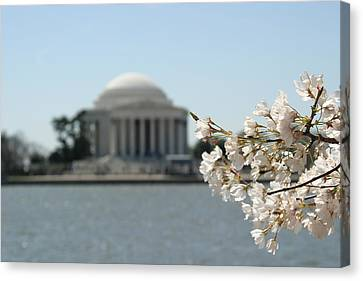 Cherry Blossoms With Jefferson Memorial - Washington Dc - 01136 Canvas Print by DC Photographer